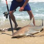angler caught shark on surf