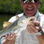 angler caught snook