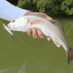 angler holding redfish with lure